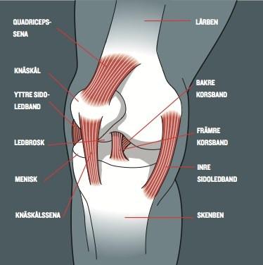 Så löser du dina knäproblem