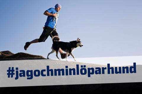 Hunden – löparens bästa vän