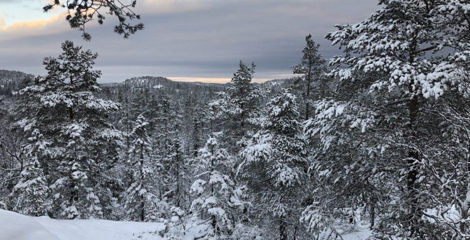 Himmel, berg och hav möts på Härnön