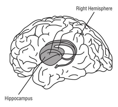 Hippocampus - en viktig del av hjärnan