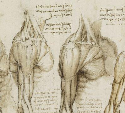Leonardo da Vinci såg människan under huden