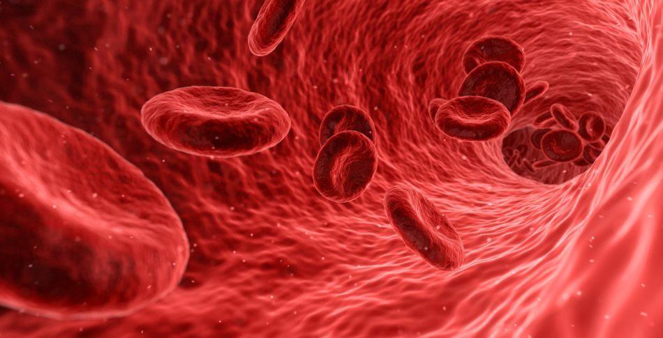 En veckas maratonträning föryngrar dina blodkärl med 8 veckor