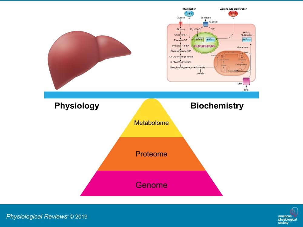 metabolomik