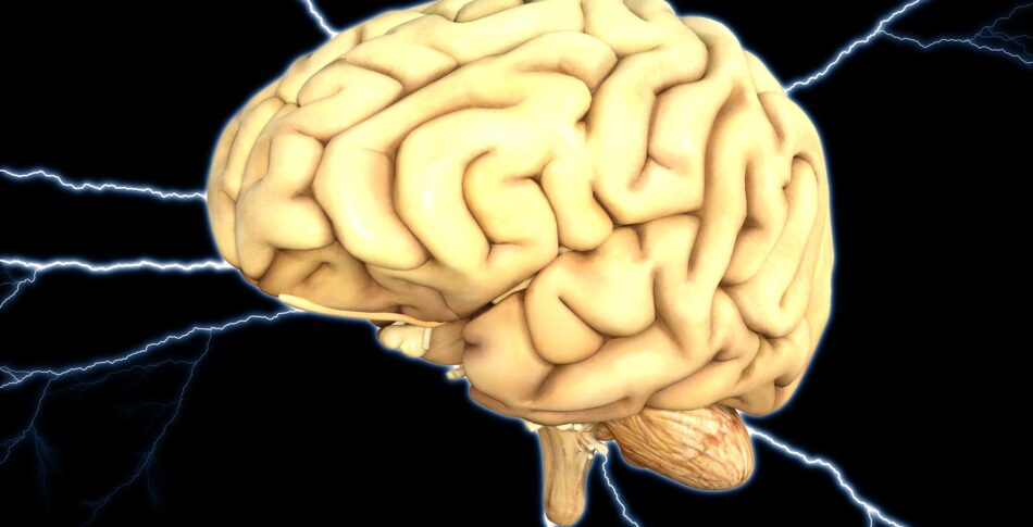 Hjärnfysikbloggen – Löpning skyddar mot demens och håller i hjärnan i trim