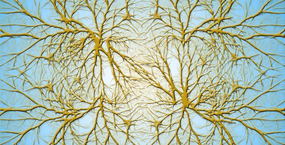 Träning ökar hjärnans gråa och vita hjärnsubstans